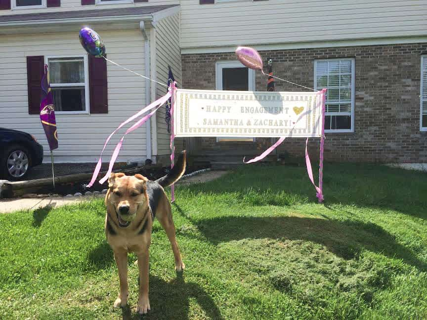 dog standing by engagement sign