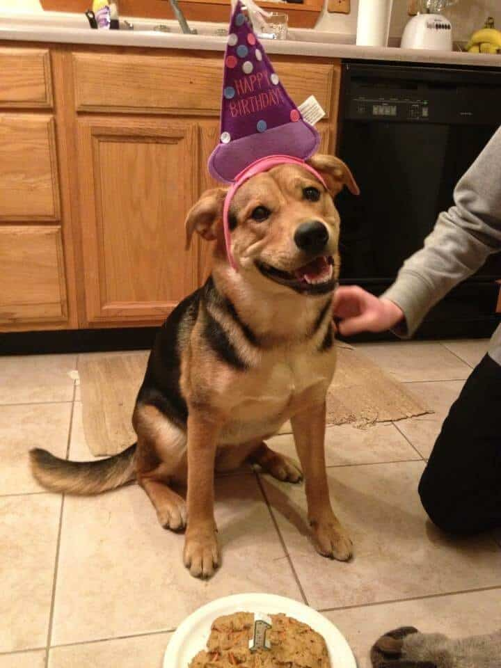 Pennys first birthday