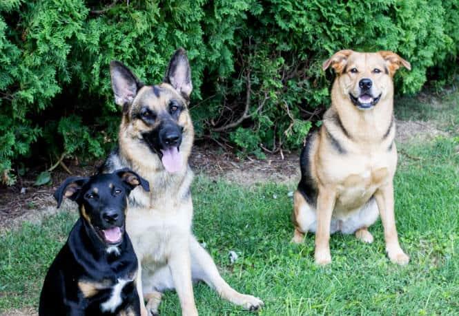My 3 Dogs