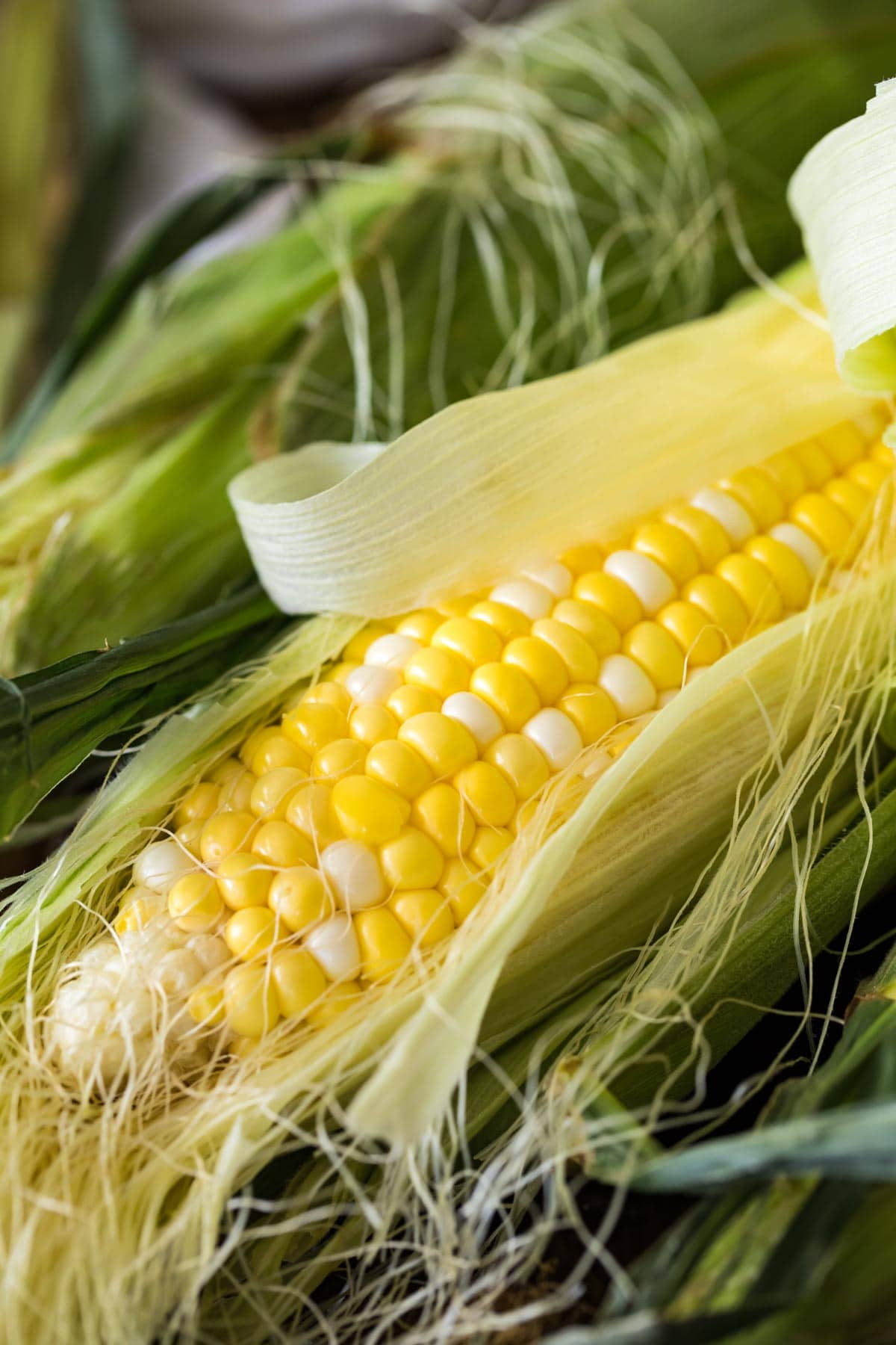 close up of corn with husk peeled back