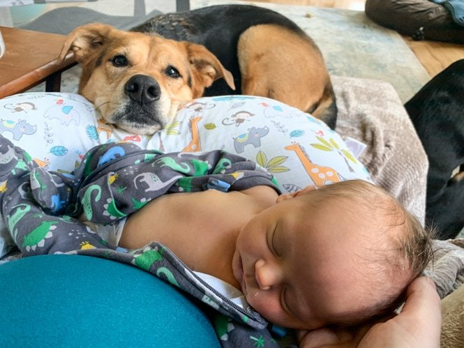 Baby with dog looking at him