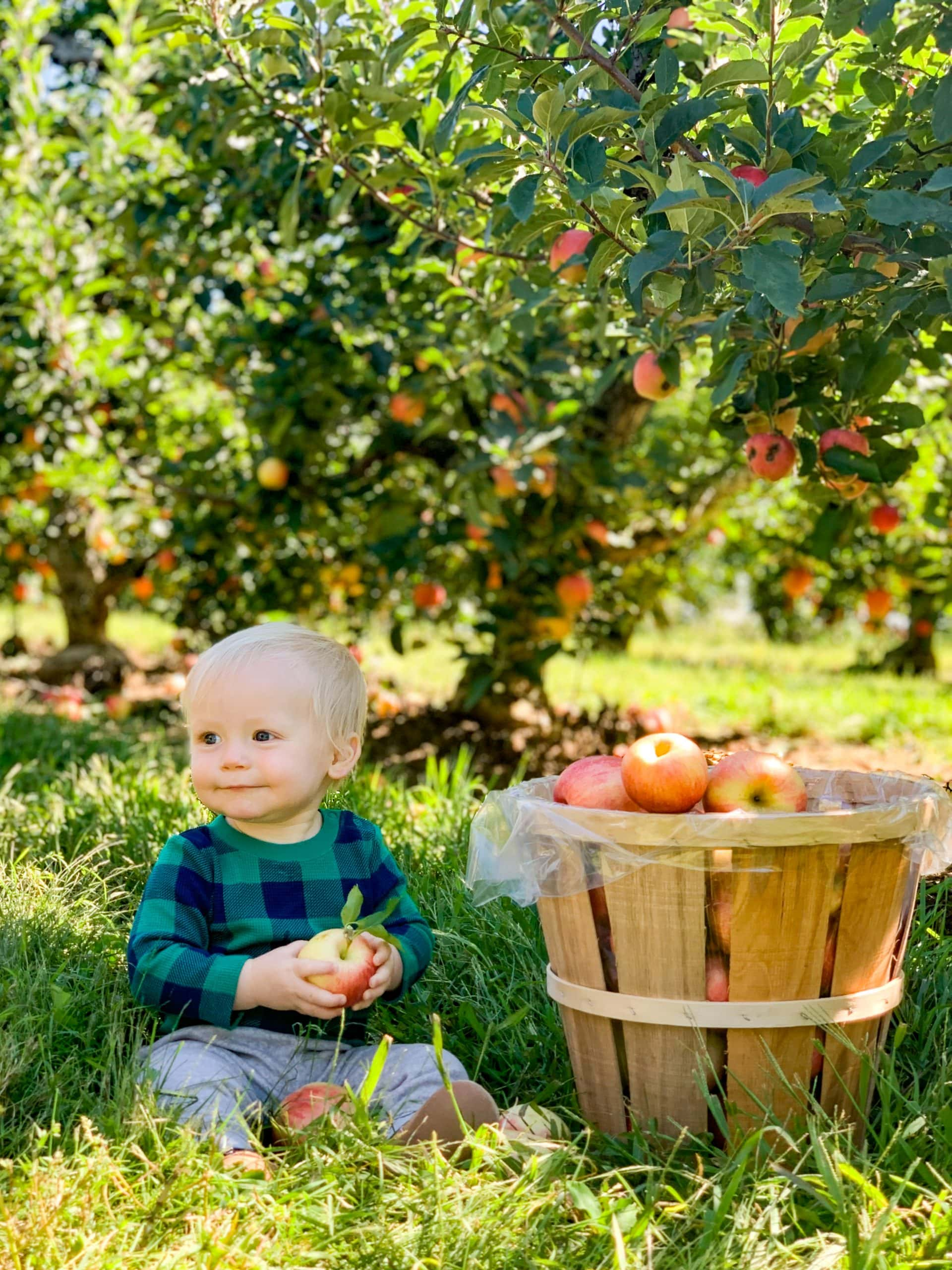 baby boy with bucket of apples